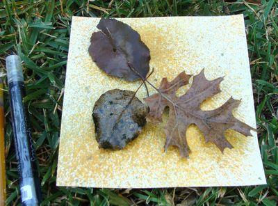 Spritz leaves